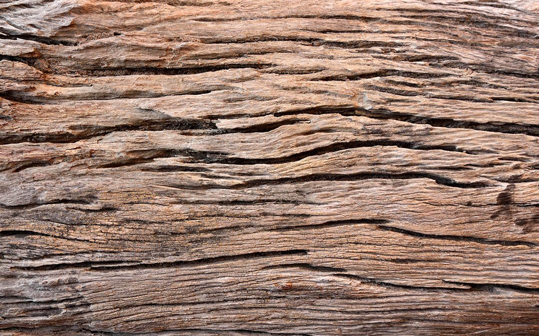 The Biodeterioration of Wood